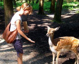 Me feeding a cute deer!